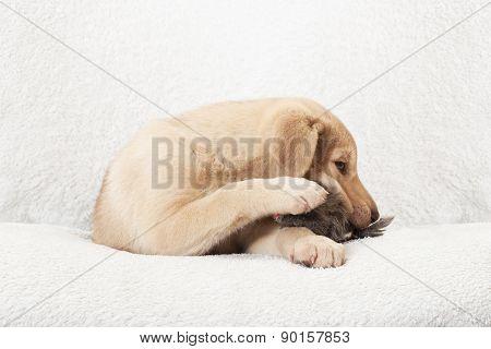 Puppy Chewing Toy Prey
