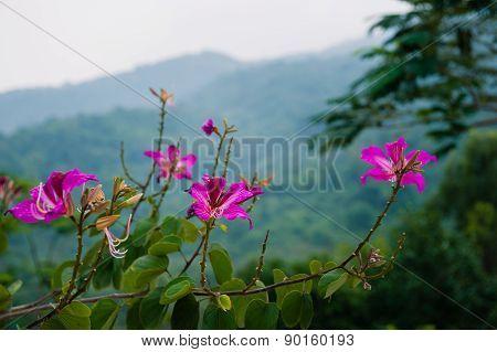 Hibiscus Flowers Garden Linh Ung Bai But Pagoda Danang