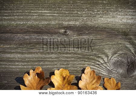 Board With Oak Leaves Concept