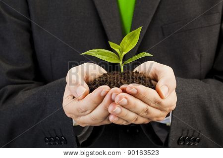 Businessman Holding Seedling