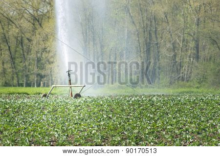 Irrigation Water Young Vegetable Fields