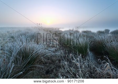 Cold Misty Sunrise On Swamp