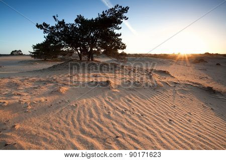 Beautiful Sunrise On Sand Dunes With Pone Tree