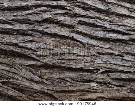 Deep Bark Texture