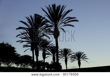 Perfect Palms