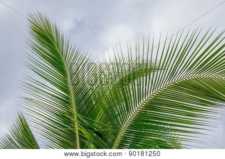 Palm Fronds against a cloudy sky.
