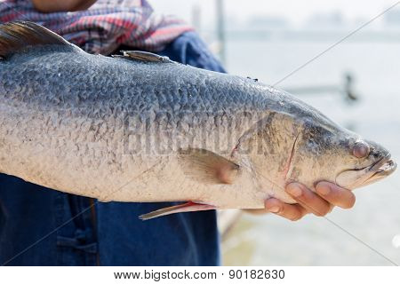 asian kitchen, sale and seafood concept - fisherman holding raw fish at street market or berth