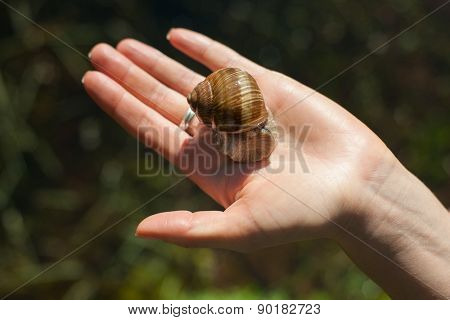 Snail on the hand outdoors