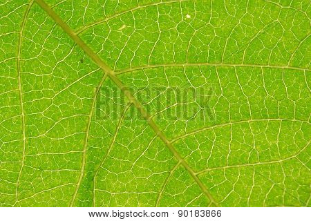 Close-up Abstract green leaf texture for background