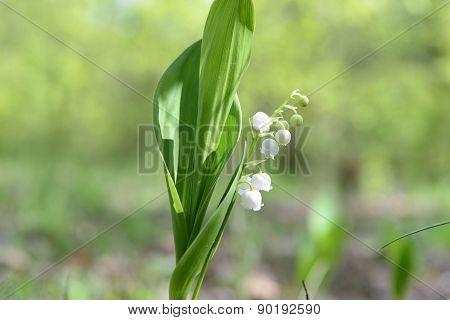 Spring Wild Flowers Bloom