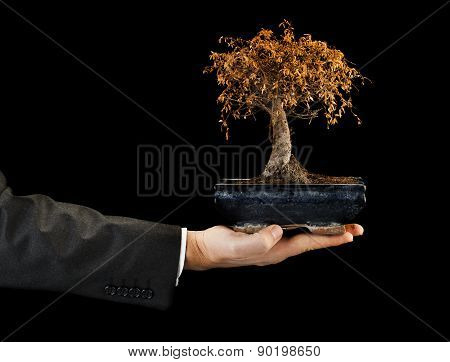 Businessman Holding Dead Bonsai