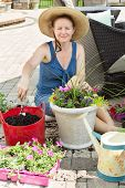 image of flower pot  - Smiling lady gardener potting up spring flowers in ornamental arrangements as she sits in the shade on a brick patio on a hot spring day with her nursery seedlings and potting soil - JPG