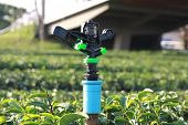 pic of sprinkler  - Sprinkler for watering for tea plantation in Thailand - JPG