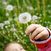 stock photo of dandelion seed  - Dandelion seed head with beautiful little girl lying in grass in the background enjoying nature and its serenity - JPG