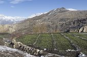 picture of mustang  - Landscape of Muktinath village in lower Mustang District Nepal. This photo was shot in early morning. Area was cover by snow. - JPG