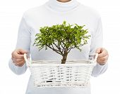 stock photo of bonsai  - Woman holding bonsai tree on white background Environment and nature protection concepts - JPG