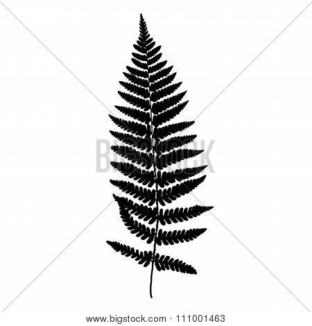 Fern frond black silhouette. Vector illustration. Forest concept.