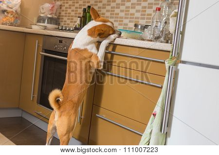 Hungry young dog having a look at kitchen bar