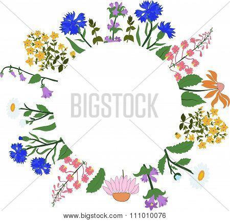 Vector card with herbs in a circle - Hypericum, Angustifolium, chamomile, Campanula, cornflowers, Ec