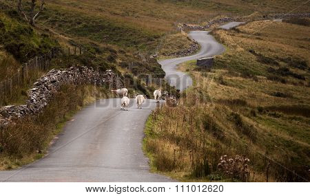Welsh mountain road