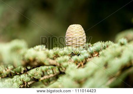 tree cone