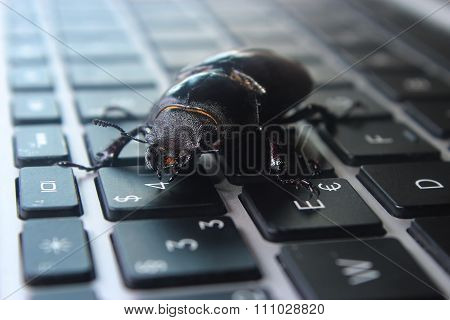 Bug on laptop keyboard. Symbol of antivirus, debugging, software optimization