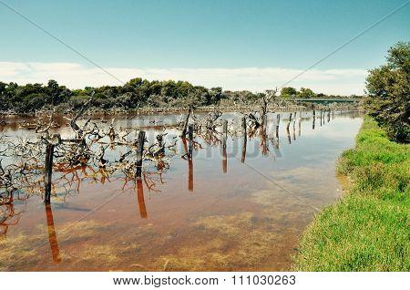 Lake Coogee Landscape,Western Australia