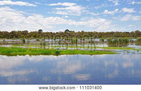 Beelier Wetlands: Tranquility