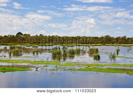 Beelier Wetlands: Conservation