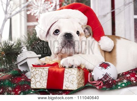 christmas dog - english bulldog wearing santa