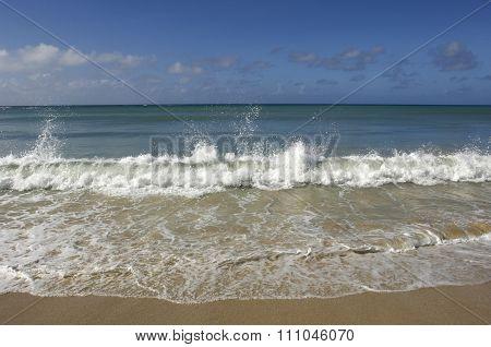 France, Martinique, Salines Beach In Sainte Anne