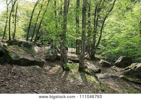 France, Les Vaux De Cernay In Chevreuse Valley