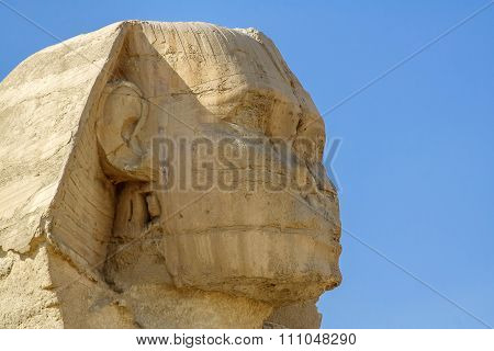 Head of the Egyptian Sphinx
