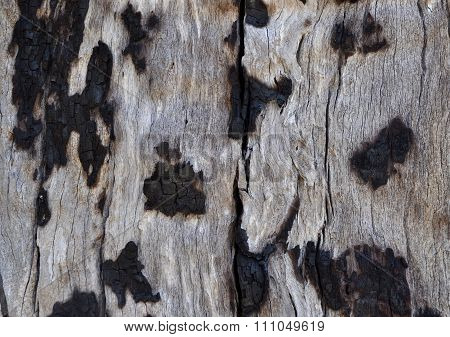 Burnt: Tree Bark Texture