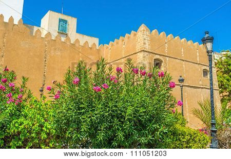 The Garden In Sfax
