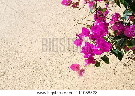 Bright Crimson Flowers On A Wall Of Cream Color
