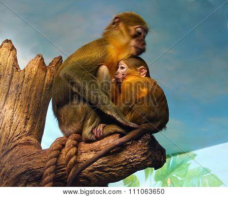 the monkey drank the milk