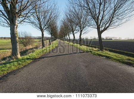 Long Rural Road With Bare Trees On Both Sides