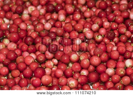 Heap of cowberry