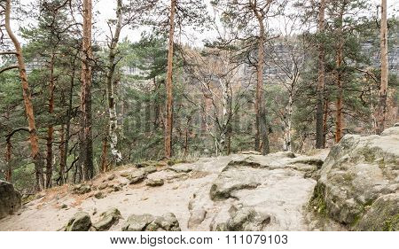 Forest In Bohemian Switzerland