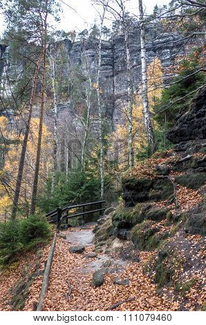 Autumn Forest At Bohemian Switzerland