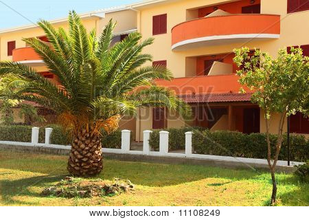 Big Palm Tree Growing Near To Three-story Building Of Sanatorium. Balconies Of Building Are Orange