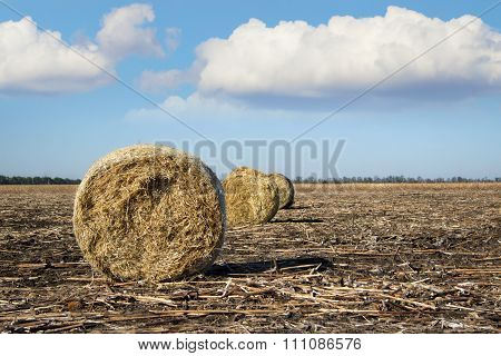 Harvesting On The Farm In Autumn