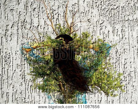 Double Exposure: Young Brunette Girl In Bikini And Pareo And Ancient Oak Tree On Gray Plaster Wall T