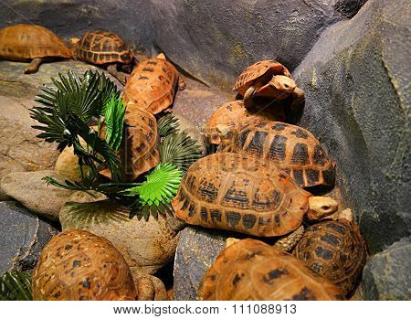 turtle pack