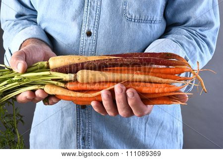 Closeup of a farmer holding his fresh picked local grown organic carrots. Horizontal format.
