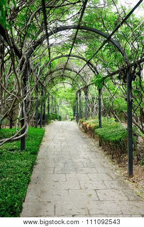 Wisteria Vine covered arbor