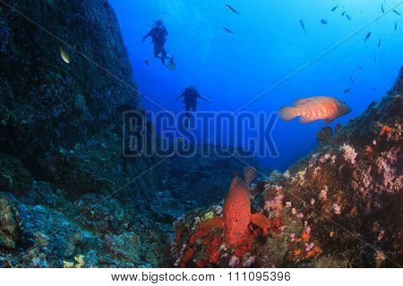 Scuba divers diving on coral reef underwater in ocean