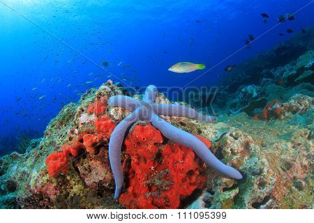 Underwater coral reef and fish: Blue Starfish