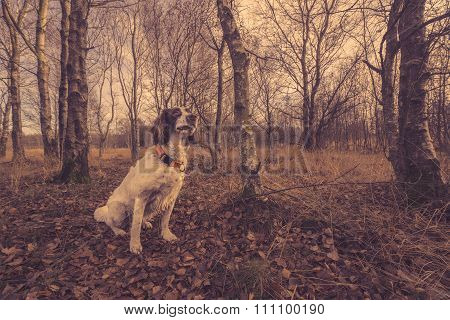 Dog Sitting In The Forest